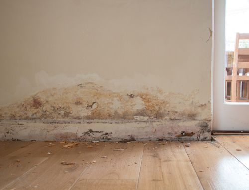 Damp – it could ruin your home